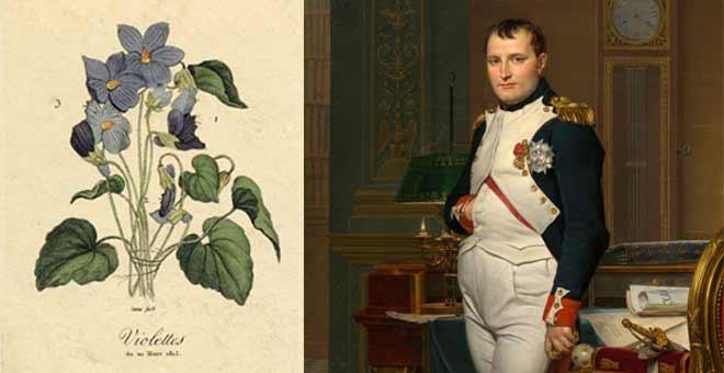 تصویر گل بنفشه مورد علاقه ناپلئون در کنار عکس نیم تنه او